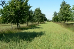 Wakelyns Agroforestry