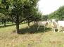 Sistemi agro-silvo-pastorali
