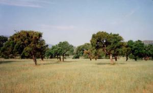 Politiche agroforestry