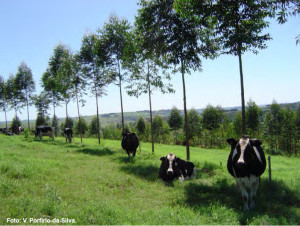 Sistemi integrati Agro-silvo-pastorali per il miglioramento della sostenibilità delle produzioni animali