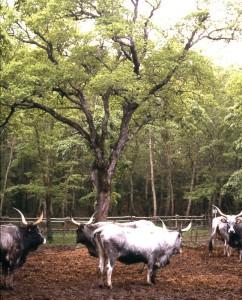 Agro-silvo-pastorale-2