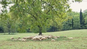 Integrazione socio-economica dei sistemi agro-silvo pastorali in Italia
