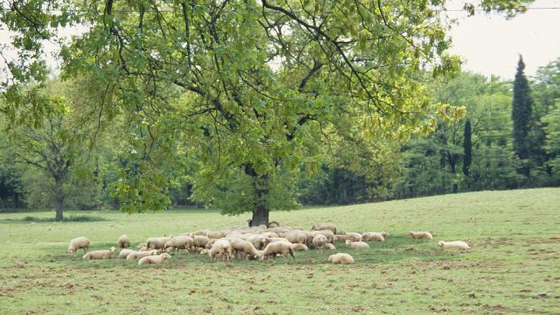 Integrazione socio-economica dei sistemi agro-silvo pastorali
