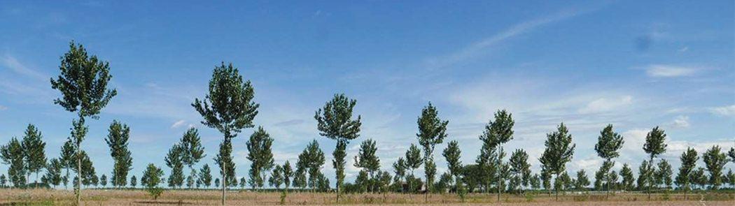 Piantagioni da legno, imboschimento delle superfici agricole e sistemi agroforestali